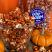 OCTOBER PUMPKIN SPICE FLAVORED POPCORN